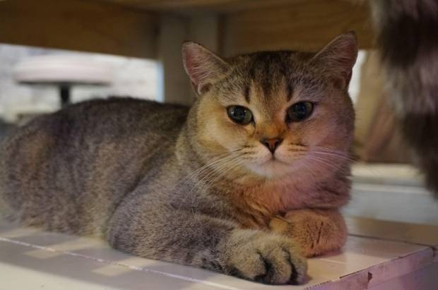 Иммуностимуляторы для кошек польза или вред
