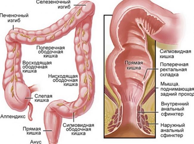 Симптомы и признаки проктита