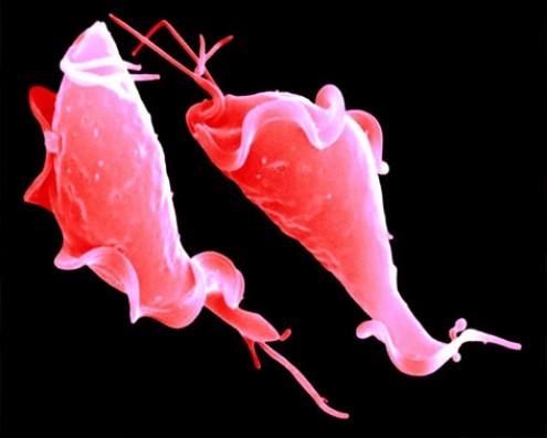Профилактика урогенитальных инфекций