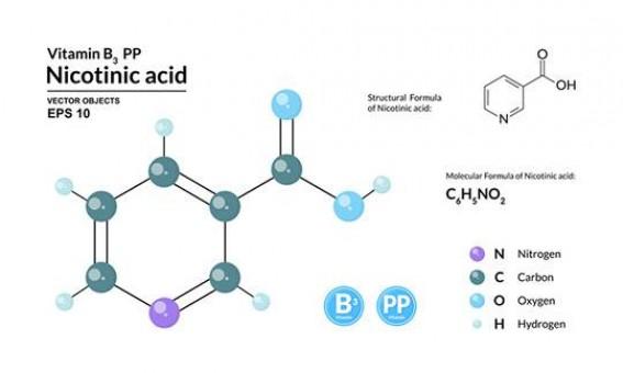 Что такое никотиновая кислота?